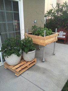 Portable palette raised bed and pot dolly garden.