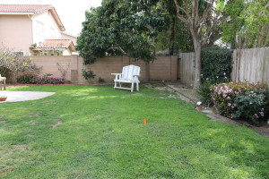 The yard before -looking left at the old lawn toward avocado tree #1.